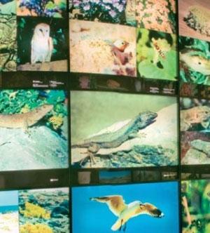 origen-y-naturaleza-del-archipielago-canario