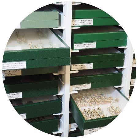Almacén del Museo de Ciencias Naturales, colección de entomología