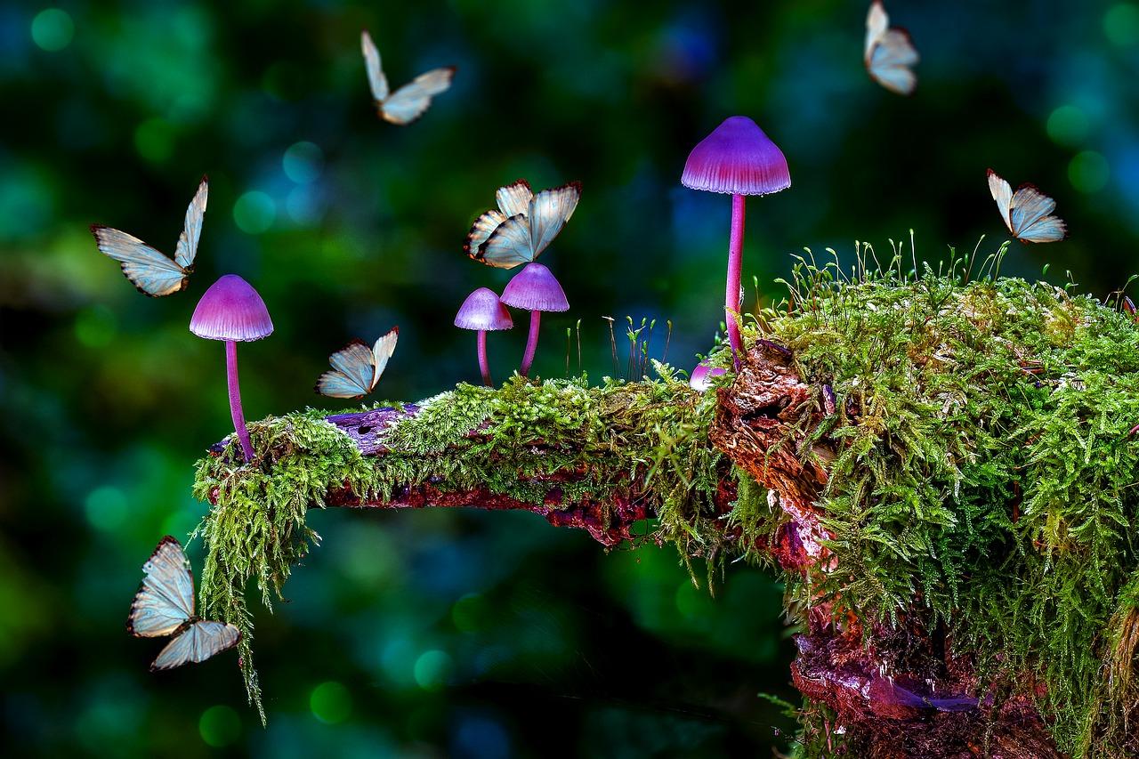 mushrooms-5672547_1280