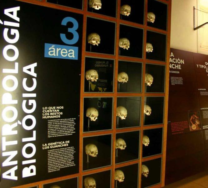 Bioantropología