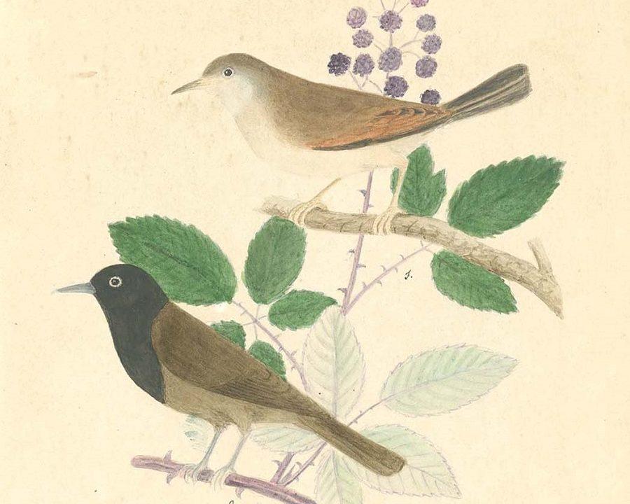 Aves de Canarias. Monográfico